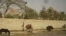 Aegypten 2008_190